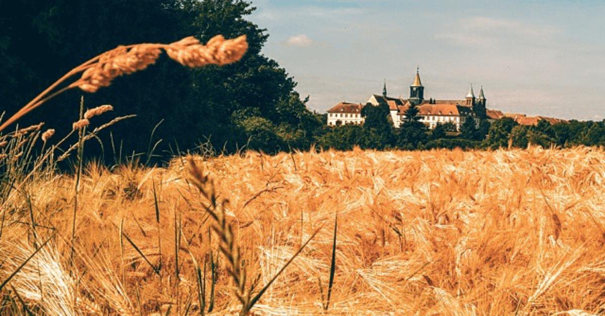 es moines trappistes d'Oelenberg prennent soin de plus de 150 ha de terres autour de l'abbaye