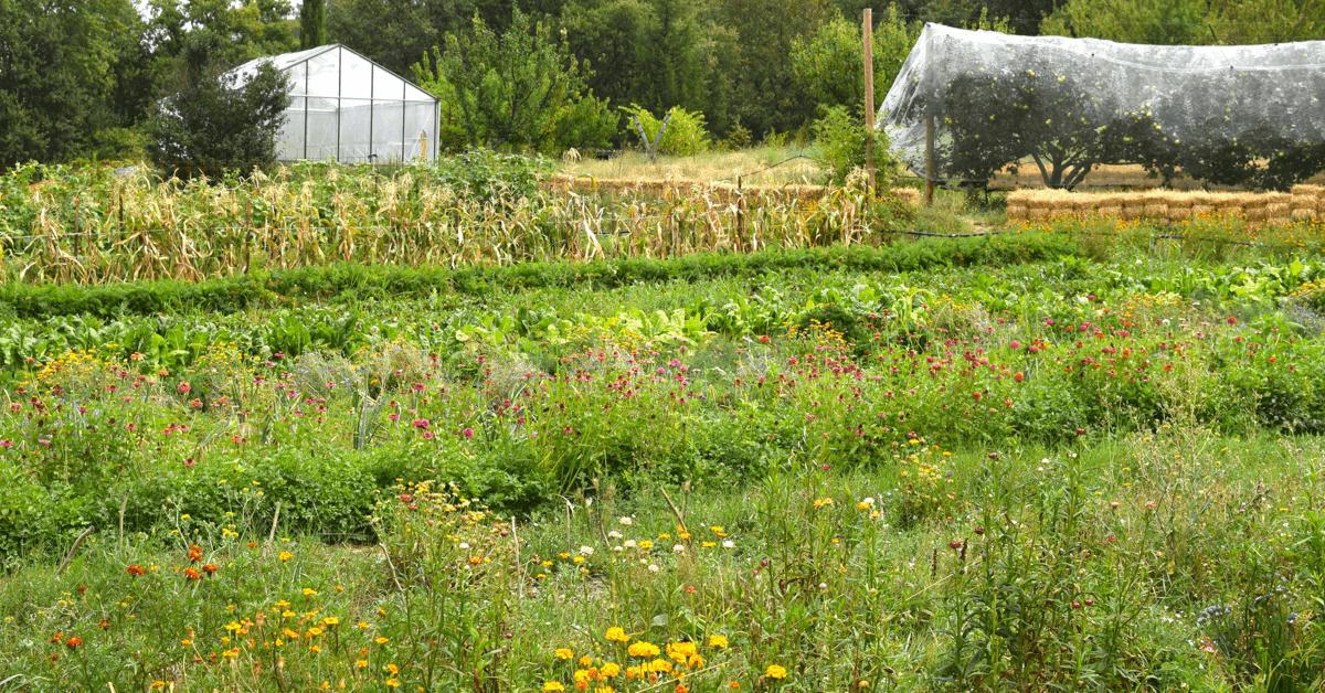 Le jardin du monastère de Solan regroupe un potager, un verger, des vignes et de la forêt : de quoi s'occuper !