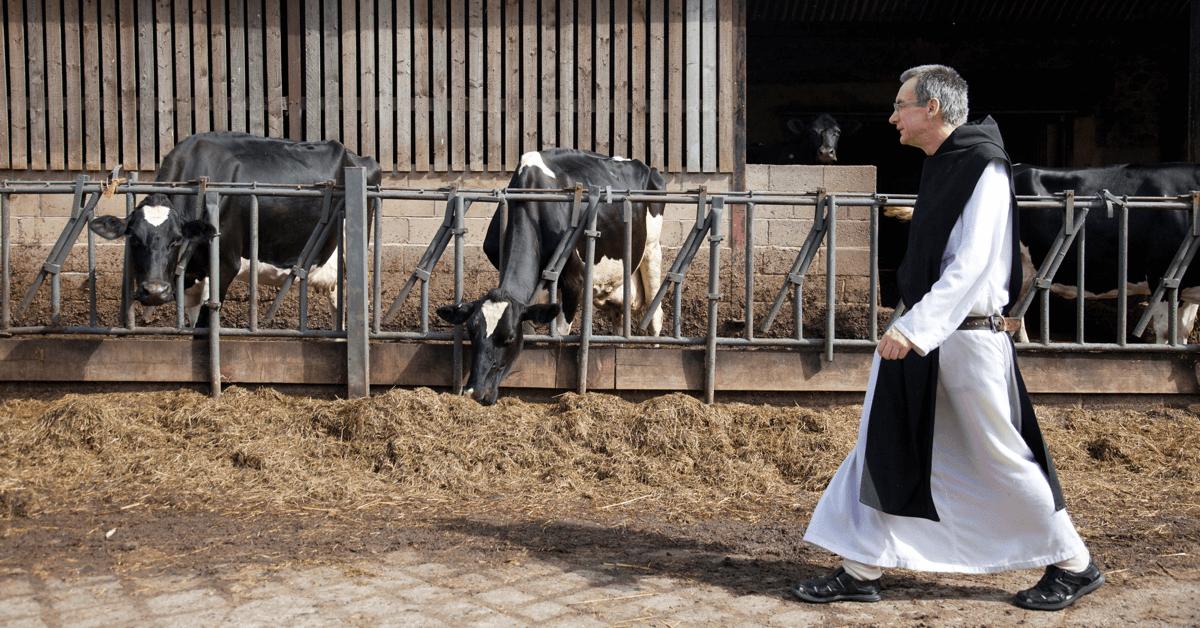 Avant de brasser la Tynt Meadow, l'abbaye du Mont SaintBernard s'occupait d'une ferme laitière