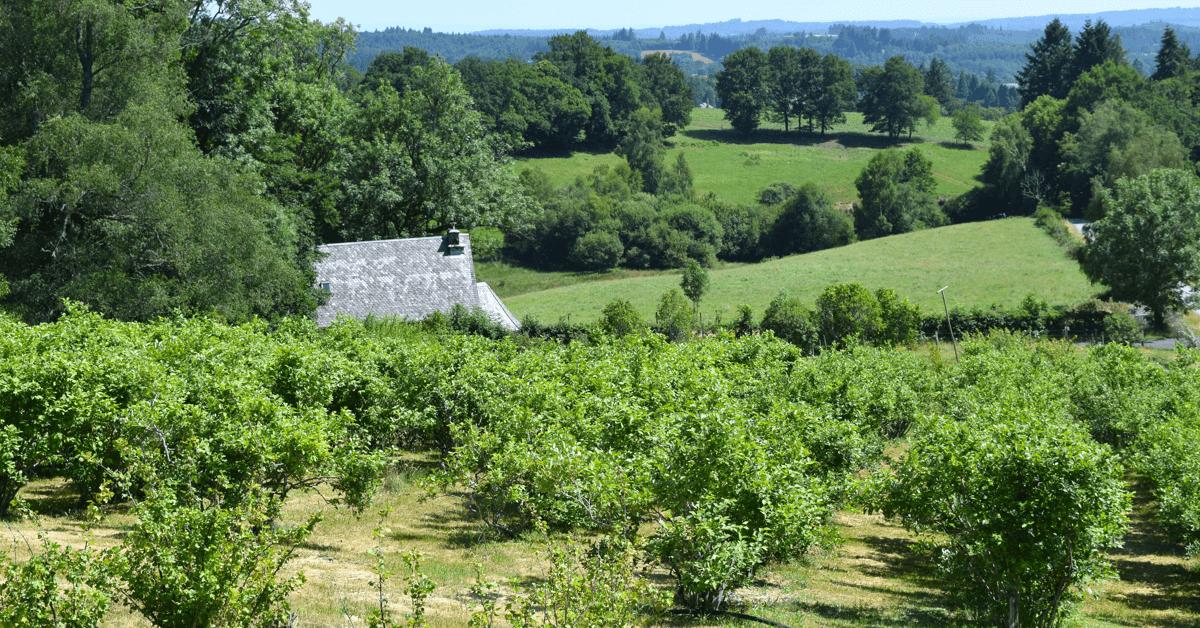 Champ de myrtilles devant le <strong>monastère du Jassonneix</strong>, en Corrèze - Divine Box