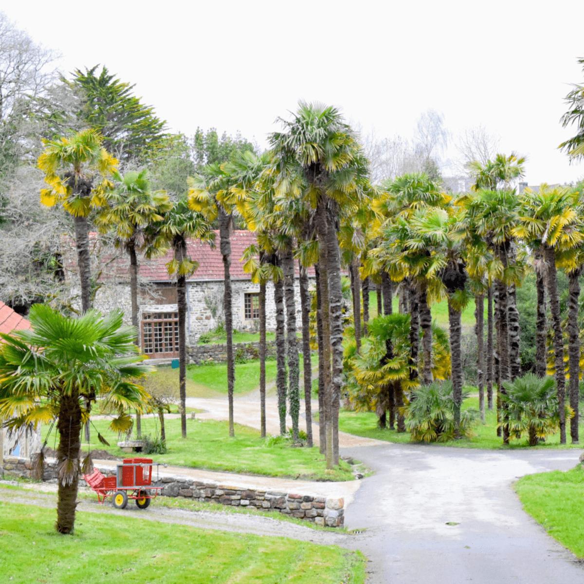 Les plantes exotiques de l'abbaye de Landévennec