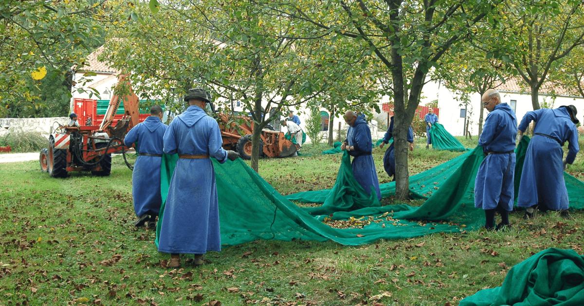 Les frères bénédictins du monastère de La Garde cultivent des noix tout au long de l'année
