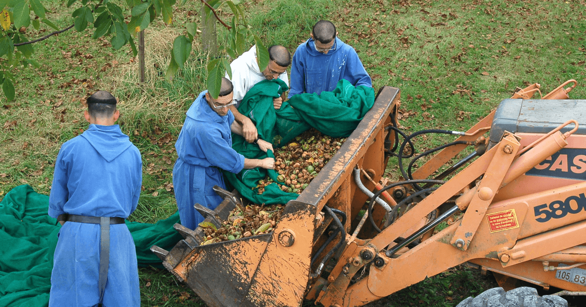 Lors de la récolte des noix, c'est toute la communauté qui est réquisitionnée