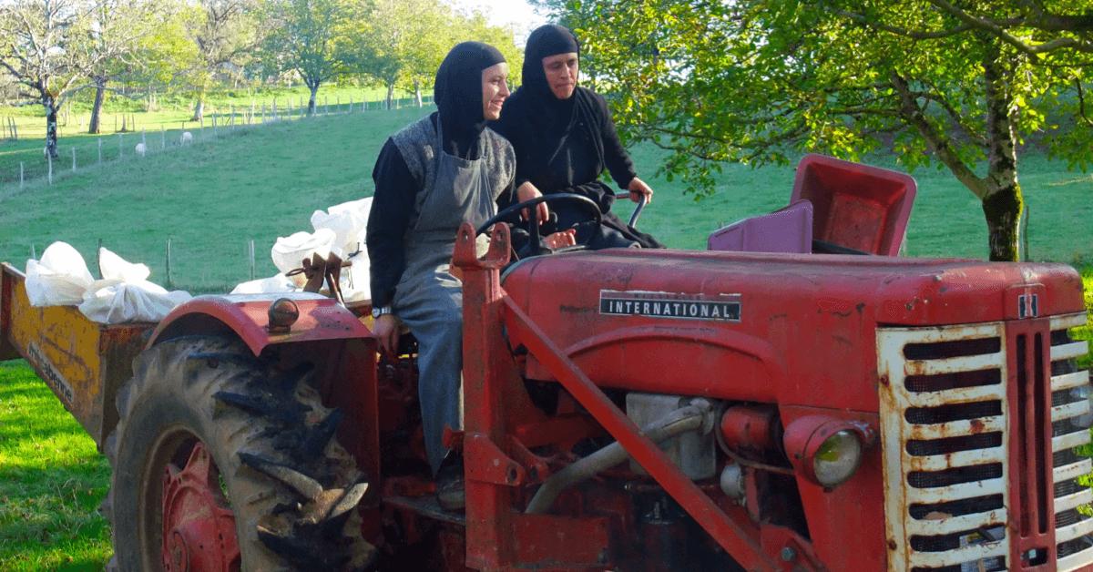 Les soeurs du monastère de la Transfiguration en pleine récolte des noix - Divine Box