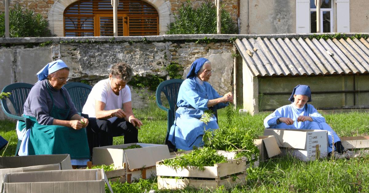 Les soeurs du monastère de Taulignan sélectionnent à la main les plantes de leur jardin pour réaliser des produits bio