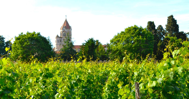 Vue sur une vigne, avec l'abbaye de Lérins à l'arrière plan - Divine Box